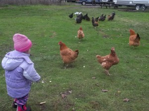 Chloe with chickens